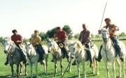 Die weißen Camargue-Pferde, wendig und trittsicher. (Foto: Sudy)