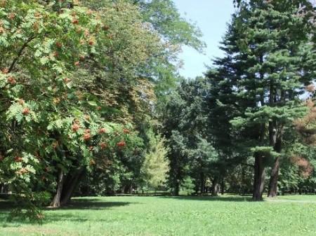 Gärten, Rasenflächen und Blumenwiesen, Sträucher und Baumgruppen in der LSF Graz.