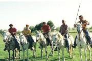 Die weißen Camargue-Pferde: wendig und trittsicher. (Foto: Sudy)
