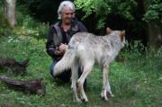 Wolf Science Center. © 2015 Manfred Staniek