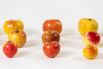 Modelle einer aus rund 300 Apfelsorten bestehenden Modellsammlung, Firma Dürfeld, Deutschland, 1880er-Jahre, Botanische Sammlung/Universalmuseum Joanneum. Foto: Universalmuseum Joanneum/Milatovic